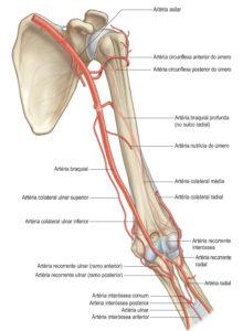 cortar la arteria femoral